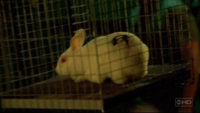 http://static2.wikia.nocookie.net/__cb20061115232211/lostpedia/images/e/e2/Bunny.jpg