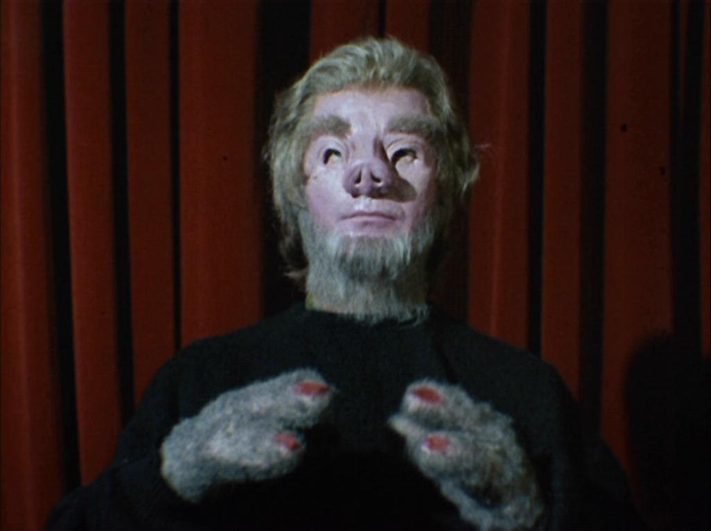 Tellarite Memory Alpha The Star Trek Wiki