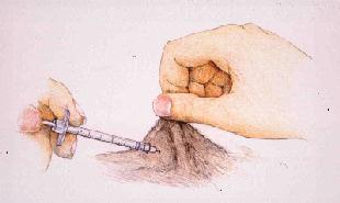 injecting insulin canine diabetes wiki