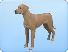 Sims  Dog Breeds Bocker