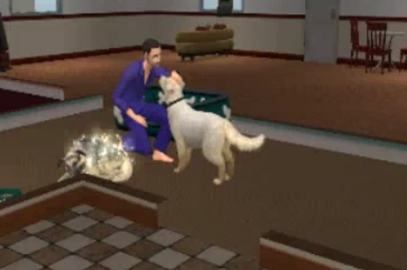 Sims  Cats And Dogs How To Give Birth