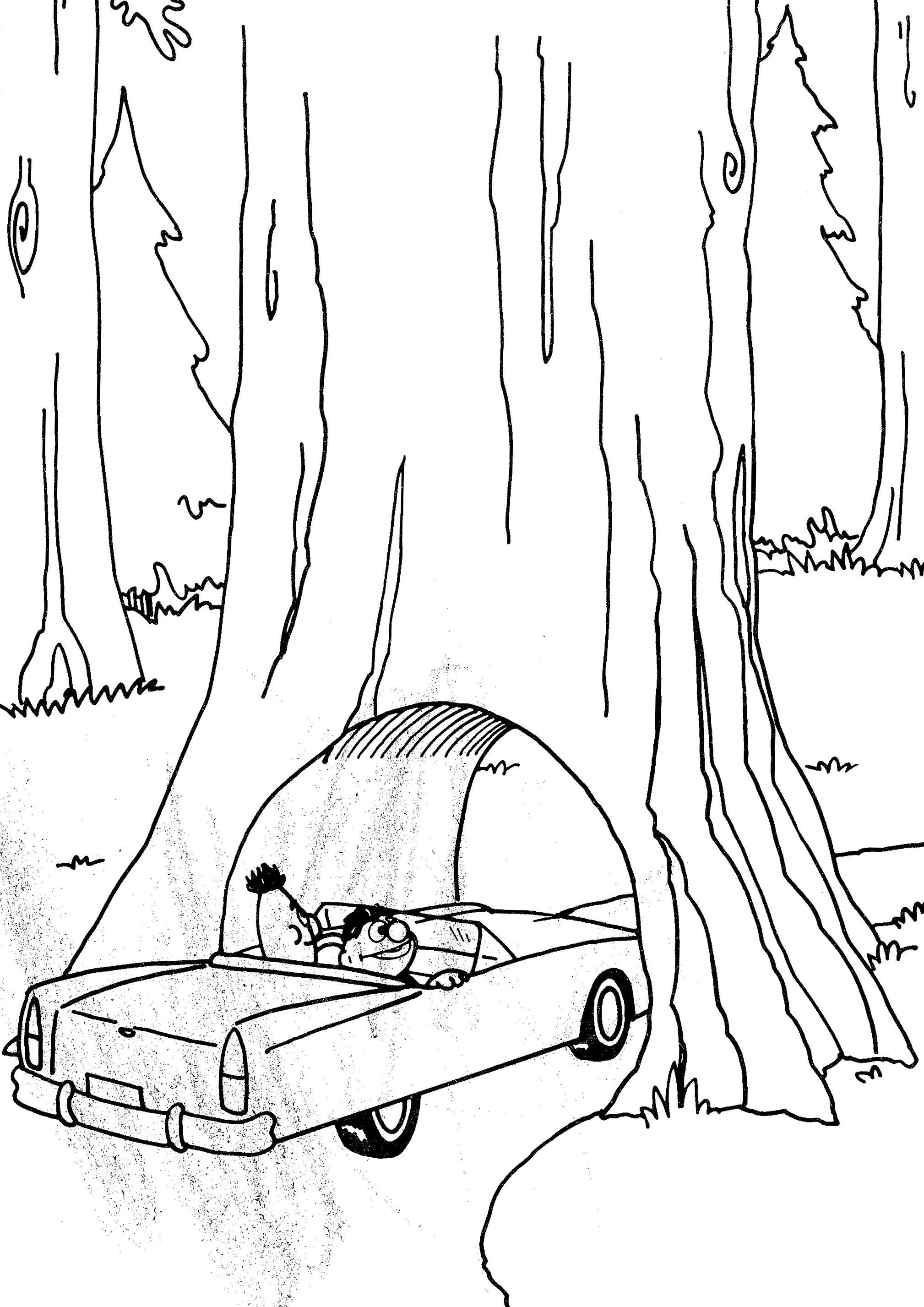 california redwood coloring pages - photo#4