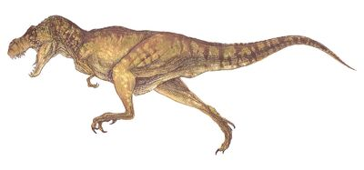 T-rex female