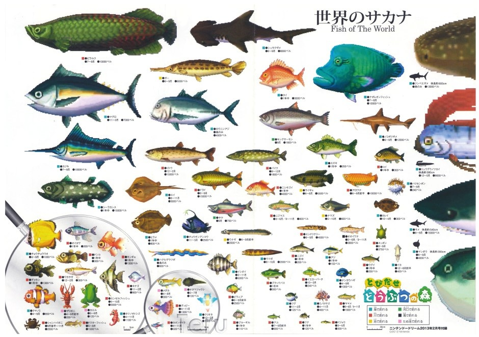 Fish animal crossing wiki for Acnl fish guide