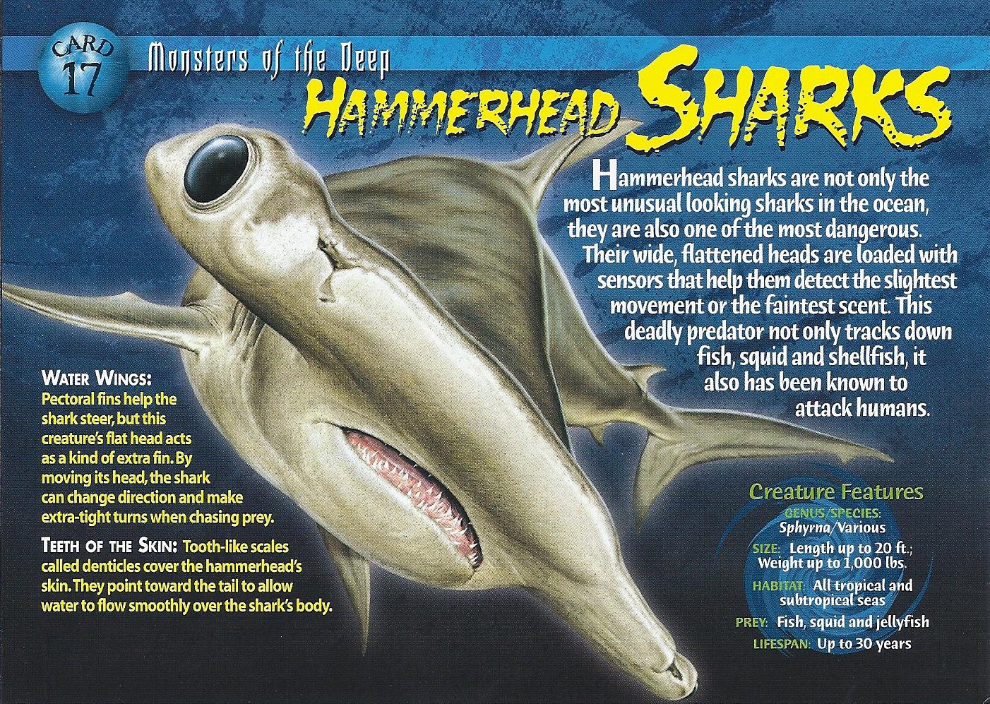 Hammerhead Sharks Wierd N Wild Creatures Wiki