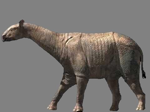 Paraceratherium - Dinopedia - the free dinosaur encyclopedia
