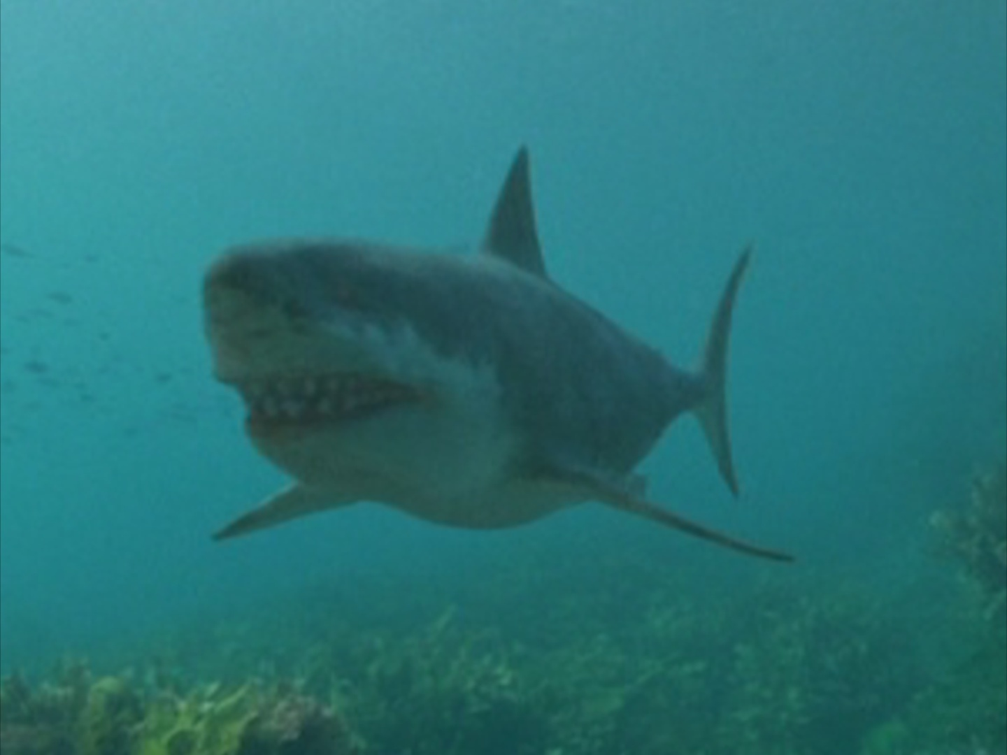 Sea Monsters Megalodon Megalodon - Walking Wi...