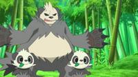 ¡Persecución en el Bosque Bambú! ¡¡Pancham y Pangoro!!